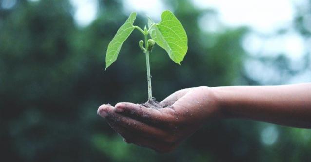 Un cadeau écolo-responsable : planter un arbre